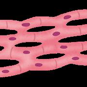 筋肉細胞の様子を表した画像
