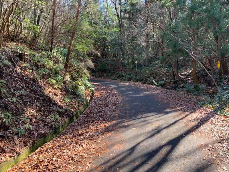 尾張富士の林道(富士線)。道には落ち葉がたくさん落ちています。季節は冬です。