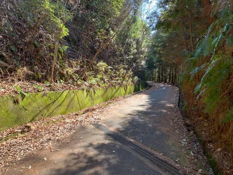 尾張富士の林道(富士線)の様子です。最強標高地点までもう一息です。