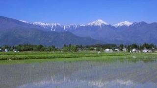 長野県安曇野市の田植えが終わった後の田園風景です。雪のかぶった北アルプスの山々も見ることができます。