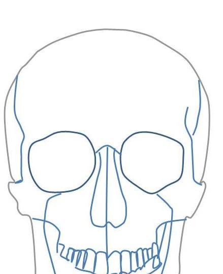 顔面の絵です。尾骨を中心とした顔面の骨の絵を描出しています。