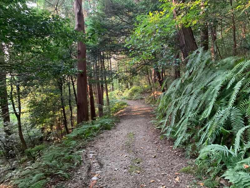 尾張富士の登山道のなだらかな下りの整備された登山道の様子の写真です。