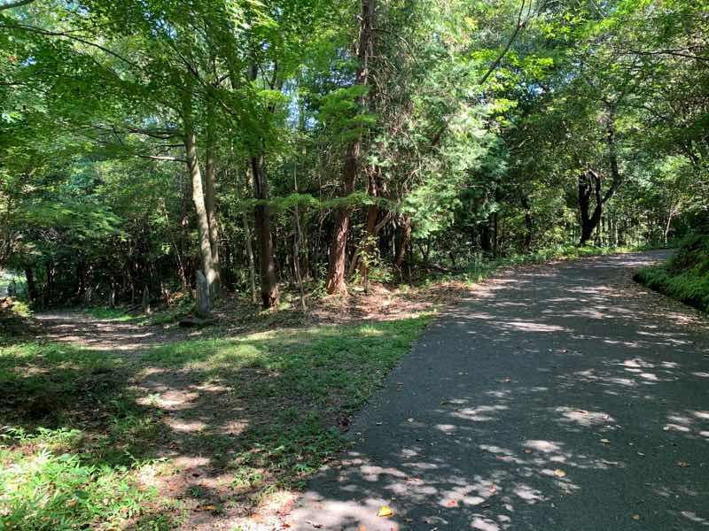 林道の起点から約700mの地点の最初の分岐点のようすです。左側に向かうと、句碑のみちの方へ向かい、右側の道が林道(富士線)です。