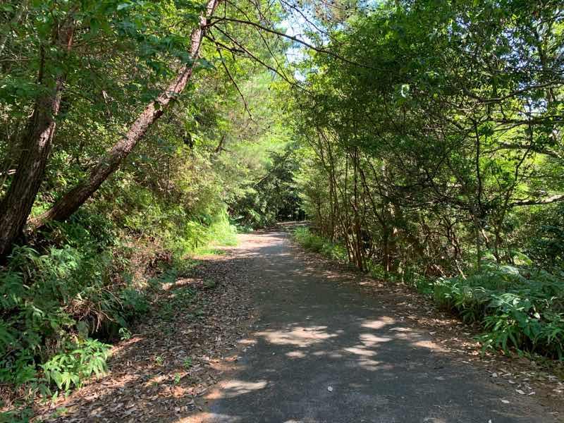 分岐点Dの右側の道(アスファルト道)が林道(富士線)です。下り基調の道になります。
