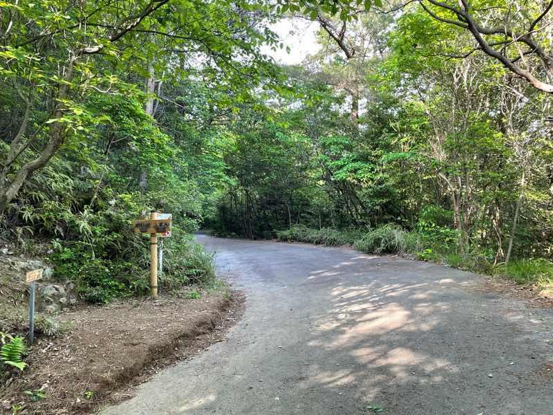 尾張富士の登山道の様子の写真です。林道の分岐点Dから山頂へ向かう道です。